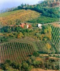 Wine farm 1